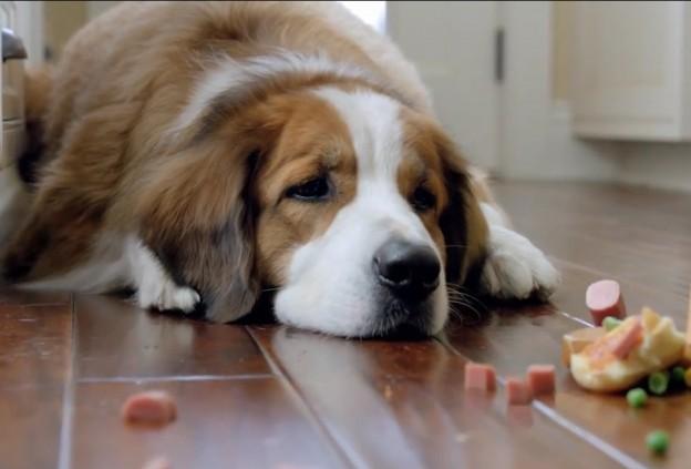 cachorro-febre1