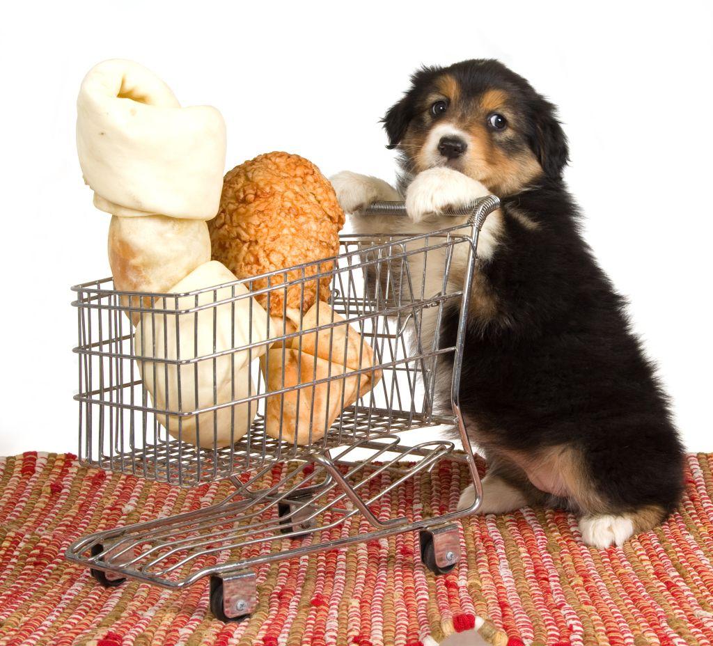 encontrar-sites-para-comprar-artigos-cachorro-gato-papagaio-ramister-passarinho-pet-shop