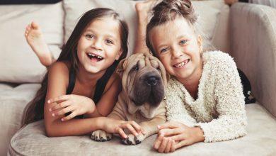 Cachorros para cães
