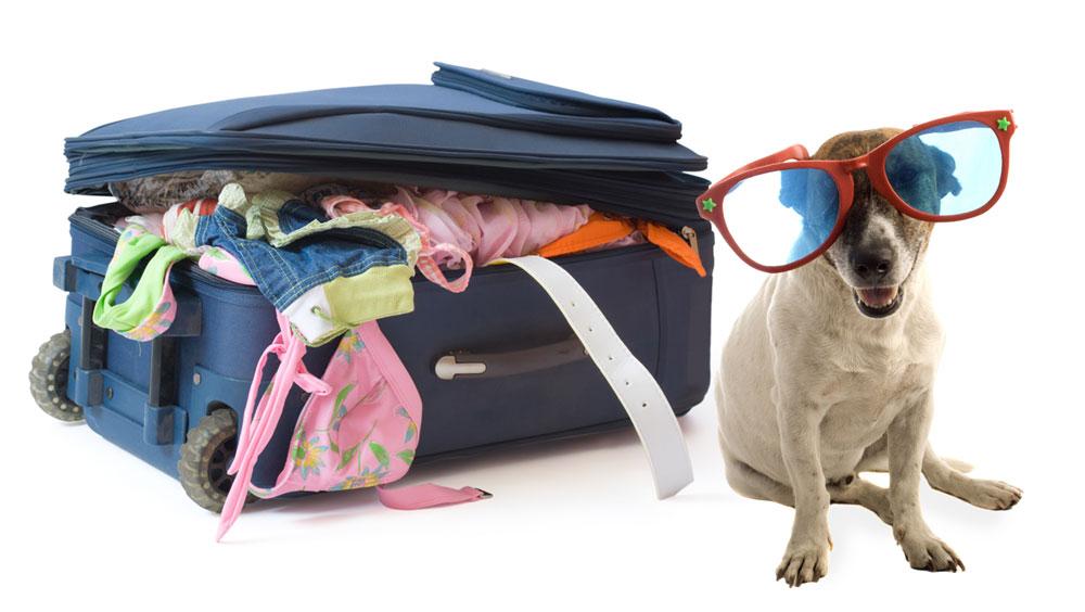 Viajar com o Cão