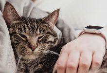 Gatos gostam de dormir com seus donos