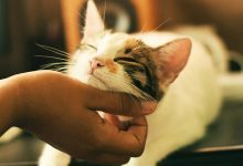 Adestrar Gatos