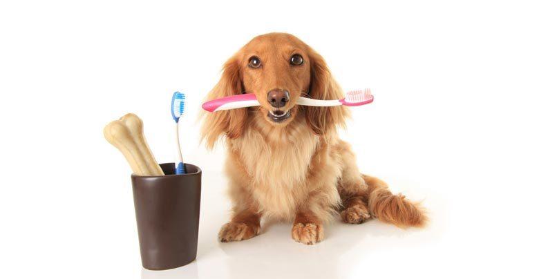 Como escovar os dentes de um cachorro sem dor de cabeça? – Blog da Neon Pet  Shop