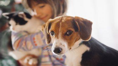 Menina segurando um gato atrás de um cachorro olhando para você