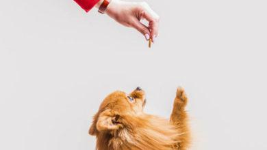 Saiba quando dar petisco para o seu cachorro
