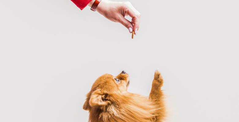 Saiba quando dar petisco para o seu cachorro – Blog da Neon Pet Shop
