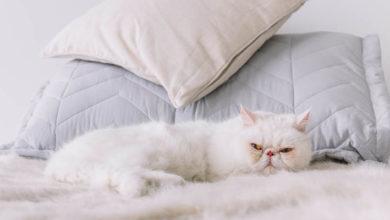 Seu gato não te deixa dormir? Conheça dicas para te ajudar nessa missão