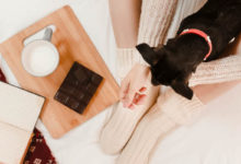 Cachorro pode comer chocolate