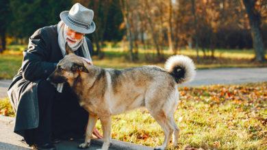 Cuidados com pets idosos
